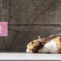 雑談-ブログ-(C)表参道・青山・原宿・渋谷エリアにある源保堂鍼灸院