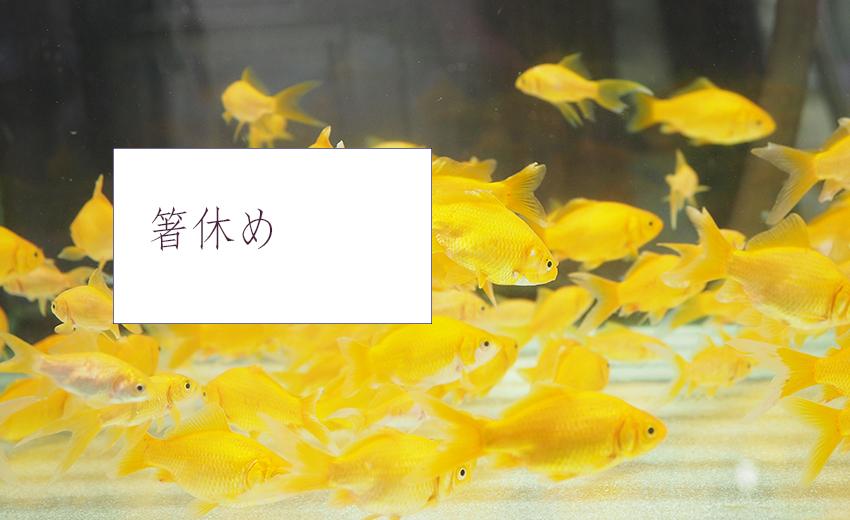 箸休めページ ブログ・リンク集など(C)表参道・青山・原宿・渋谷エリアにある源保堂鍼灸院