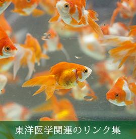 東洋医学関連のリンク集(C)表参道・青山・原宿・渋谷エリアにある源保堂鍼灸院