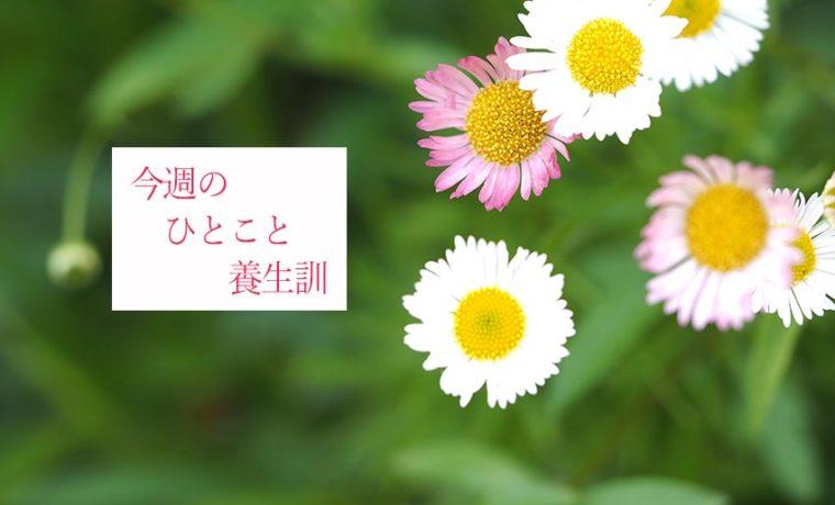 今週のひとこと養生訓(C)表参道・青山・原宿・渋谷エリアにある源保堂鍼灸院Tokyo Japan Acupuncture Clinic